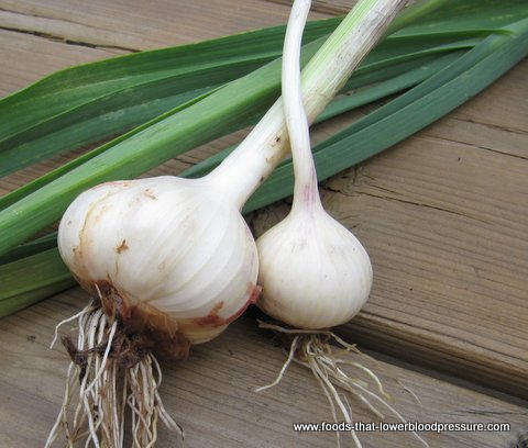 garlic-herb-that-lowers-blood-pressure